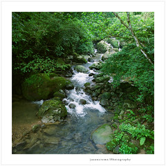 A river runs through it (jasoncremephotography) Tags: rolleiflex fw rollei rolleiflexfw fujicolor 160ns analog 120 film mediumformat taiwan asia river green
