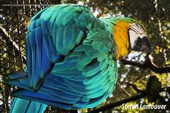 Arara (Stefan Lambauer) Tags: fozdoigua arara parquedasaves birds tourism turismo parquenacionaldoigua stefanlambauer 2016 brasil brazil paran br