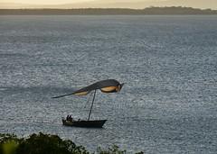 Dhow negotiating mangroves at Kilwa Kisiwani on return voyage (2) (Prof. Mortel) Tags: tanzania dhow mangroves