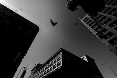 Los Angeles (Rinzi Ruiz [street zen]) Tags: losangeles monochrome fujifilmxpro2 rinziruiz streetphotography usa xpro2 fujifilmxf1024mm california streetzen city streetphoto bw photography art blackandwhite blackandwhitestreetphotography fujifilmxus urban 5yearsofxseries fujifilm