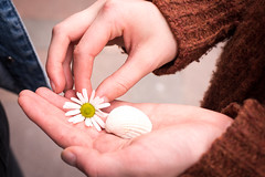 Collecting nature (Capture the planet) Tags: fx d810 fullfame nikon nikkor flickr hands hand collector flower shell child children nature natural collecting white fav10 35mmf14g