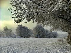 Well Trodden Snow, England, UK (Beardy Vulcan) Tags: trodden snow snowcovered snowy