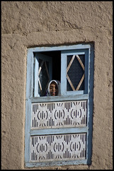 DSC_6537 (Sgaffo) Tags: yemen travelling 20072008 socotra