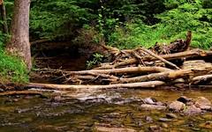 DSC_5174-Edit (zeiberc) Tags: outdoor nature streams trees on1 nikonflowersplantsgoogleniknaturenikkor55300gvrnikond7000on1summertopazadjustdejpeg