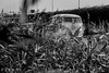 "DZ-18-90 Volkswagen Transporter kombi 1963 • <a style=""font-size:0.8em;"" href=""http://www.flickr.com/photos/33170035@N02/29278000470/"" target=""_blank"">View on Flickr</a>"