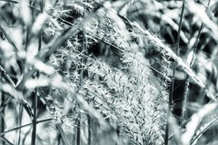 (***toile filante***) Tags: meadow wiese nature natur bw sw schwarzweiss blackandwhite monochrome