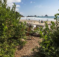 oregon (55 of 147) (SPLTImage Inc.) Tags: oregon trip travel vacation waterfalls ecola coast westcoast nature naturephotography