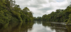 Paisatge típic de Caño Negro (fotosmeteo) Tags: estiu riu river selva jungle aigua paisatge summer landscape cañonegro naturalesa nature costarica