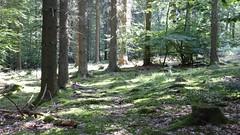 Bemooster Wald im Hunsrück