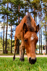 Enjoying the meal (milosb014) Tags: foal colt horse grass meal wide zlatibor mountain nikon d5200 sigma 1750mm f28 serbia