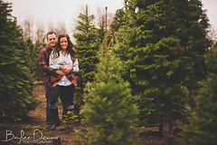 Hanna & Josh (wakeupbaylee) Tags: christmas winter holiday tree cute love lights washington nikon kiss couple hanna romance holly josh fir mistletoe plaid douglas d700 wakeupbaylee bayleedennisphotography