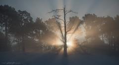 _DSC8144.jpg (Ingeborg Ruyken) Tags: morning autumn trees snow sunrise landscape nationalpark bomen december sneeuw herfst ochtend winterwonderland 2012 landschap naturephotography loonseendrunenseduinen nationaalpark zonsopkomst natuurfotografie