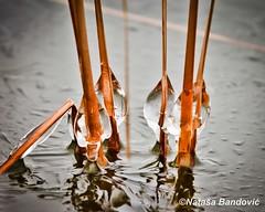 Winter Dance (Nataa Bandovi) Tags: park winter lake toronto canada frozen walk canondslr frozenlake withoutsnow 5dmk2 natasaban natasabandovicphotography natasabandovic