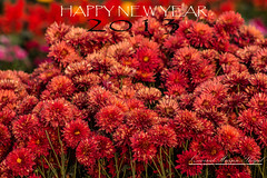 Welcome  2013 (Shajal1 (updating my contact )) Tags: life flowers red cloud color macro nature beautiful beauty closeup canon wonderful dark lens eos leaf amazing colorful dof shot 300mm 55mm disk dell intel hassan lovely 75mm supershot 2013 i7 70mm300mm shajal blinkagain gettyimagesbangladeshq12012 qamrul
