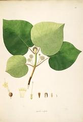 Anglų lietuvių žodynas. Žodis rubiaceae reiškia <li>rubiaceae</li> lietuviškai.