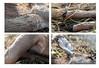Beauty in Death (nichole.alyse) Tags: beauty death deer dew roadkill projects rit quadtych tych