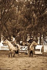 Gauchos (@Lizette Salazar Guedes) Tags: horses sepia canon uruguay caballos photo flickr foto remate gauchos durazno