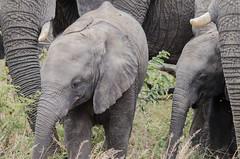 DSC_7125.jpg (Andrew Stolper) Tags: southafrica safari shameful outrageous krugerpark limpopo resigned resign broadcom misconduct prosecutorial broadcommisconduct andrewstolper andrewdanastolper