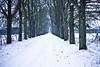 Les Bréviaires (DavidFritz) Tags: pluie voiture bleu route neige nuages temps blizzard chemin chevreuil rambouillet marches glisse estelado canon5dmarkii arbreseneigés