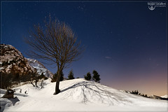 Stars&Tree! (Beppe Cavalleri - www.beppecavalleri.com) Tags: light italy moon snow tree nature night stars landscape nikon maniva 1424 beppecavalleri d800e