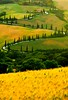 Zig Zag Road (5ERG10) Tags: road trees summer portrait italy green classic sergio field june yellow vertical painting star la corn nikon holidays europe italia postcard hill tuscany michele cypress toscana valdorcia vangogh zigzag foreground grano tuscan agriturismo d300 starred berti foce cipressi lafoce amiti 5erg10