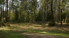*** (pszcz9) Tags: polska poland przyroda nature las forest droga road drzewo tree pejza landscape wiosna spring sony a77 beautifulearth