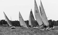 Helsinki-Tallinna Race (Antti Tassberg) Tags: 2016 bw blackandwhite helsinki htr meri monochrome purjehdus purjevene race regatta sailing sailingboat sea tallinna yacht