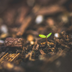Coming Aground (Graydon Armstrong) Tags: nature serene macro sapling garden soil growing depthoffield