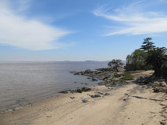 """Colonia del Sacramento: un palmier, un pin, une petite plage, rien de plus normal en bord d'estuaire ;) <a style=""""margin-left:10px; font-size:0.8em;"""" href=""""http://www.flickr.com/photos/127723101@N04/29080855933/"""" target=""""_blank"""">@flickr</a>"""