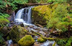 Ampitheatre Falls (djryan78) Tags: wood tranquil landscape dslr australia stream ampitheatrefalls outdoor canon rocks 6d river noojee afternoon rainforest toorongo log spring toorongoriver foliage calm logs canon6d trees 1740l tree water rock moss canon1740l 1740 canon1740 victoria waterfall lichen branch