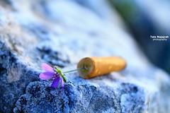 _MG_1759 (halanajajrah) Tags: تدخين سجائر اعقابالسجائر