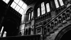 Natural History Museum (eduardo.rodriguez87) Tags: ifttt 500px art black white building city cityscapes clouds london original rated showcase sky sunset architecture bw clear exploration glass lines monochrome museum skyscraper snapseed urban wow no person travel arch church old window column light monument blackandwhite england unitedkingdom gb