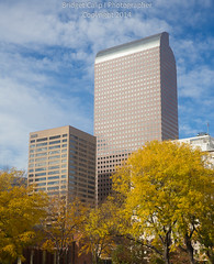 Denver Skyscrapers With Golden Fall Foliage (Bridget Calip - Alluring Images) Tags: 2014 autumn bluesky bridgetcalip buildings capitalcities centennialstate civiccenterpark clouds colorado coloradocapitol decidioustrees denver fallcolor marble milehicity milehighcity queencityoftheplains skyscrapers trees windows allrightsreserved copyrighted downtowndistricts financialdistrict goldendome puffyclouds