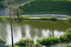 DSC01341 (rhema.lin.227) Tags: pond maple garden park taichung taiwan xitun district