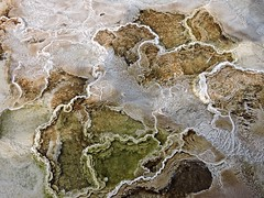 Terrasses (ebergcanada) Tags: nature detail yellowstonenationalpark hotsprings yellowstonepark