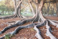 TwoHearts (Zu Sanchez) Tags: tree arboles zusanchezphotography zusanchez zsnchez sevilla seville andalusia andalucia
