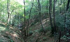 2-IMG_5033 (hemingwayfoto) Tags: bach facebookalbum geologie landschaft laubwald tal wald