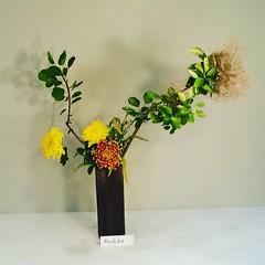 Machiko's #ikebana