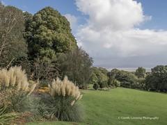 Clyne Gardens 2016 09 30 #18 (Gareth Lovering Photography 3,000,594 views.) Tags: clyne gardens botanical swansea wales flowers trees shrubs park olympus stylus1s garethloveringphotography