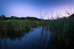 Silence In The Reeds (Joshua Maguire Photography) Tags: landscape fine art travel hiking adventure nature texture