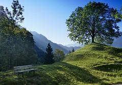 Alpine morning (evakatharina12) Tags: alpine alps allgu hindelang scenery landscape morning meadow tree mountain outdoor panasonic fz1000 bavaria germany