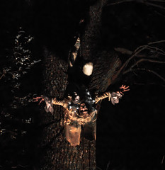 Hanging Around At Night (berg81) Tags: tree gardens night vampire trelissick pentaxk7