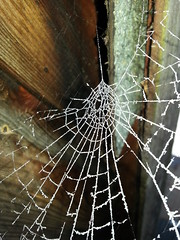 icy web (will668) Tags: wood uk greatbritain morning winter england white cold art ice nature water beauty garden spider frozen frost crystal unitedkingdom web arachnid magic shed spiderweb freezing frosty freeze icy frostymorning winterwonderland icecrystal webbing froze naturesart wintersmorning frostedweb icyweb frozenspiderweb will668