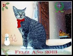 Happy Mew Year  !!! (MaPeV) Tags: cats chats chat tabby kitty gatos gato neko katze morris gatti gattoni gattini tabbyspoted bellolindoguapetn