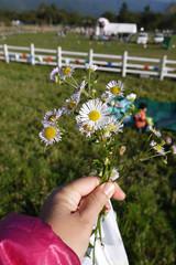 カンティフェアにて・娘がくれたお花の写真