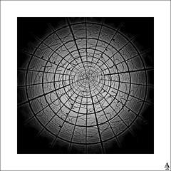 Sol / Sun (A. Jimnez) Tags: madrid b bw espaa sun sol alex square arbol j bn squaredcircle crculo belmonte albacete cuadrado jimnez a trayo