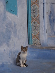 Chefchaouen, Morocco (ChihPing) Tags: travel blue digital pen cat lite olympus morocco f18 chefchaouen 45mm  m43   epl1 microfourthird mzuiko