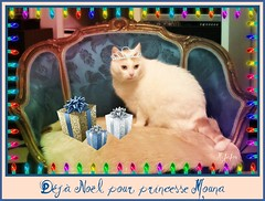 Princesse Mouna (Figareine- Michelle) Tags: kissablekat bestofcats catmoments vg~catsgallery