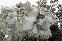 Eisregen II (mobilix) Tags: eis wald waldviertel eisregen einsonce kw51155