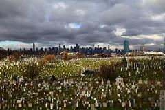 Calvary Cemetery (wmliu) Tags: usa ny newyork us queens calvarycemetery movingbus i278 wmliu